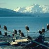 flock-bald-eagles_844.jpg