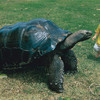 Giant tortoise with Kid.jpg