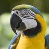 parrot bird.jpeg