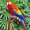 parrot-0016.jpg